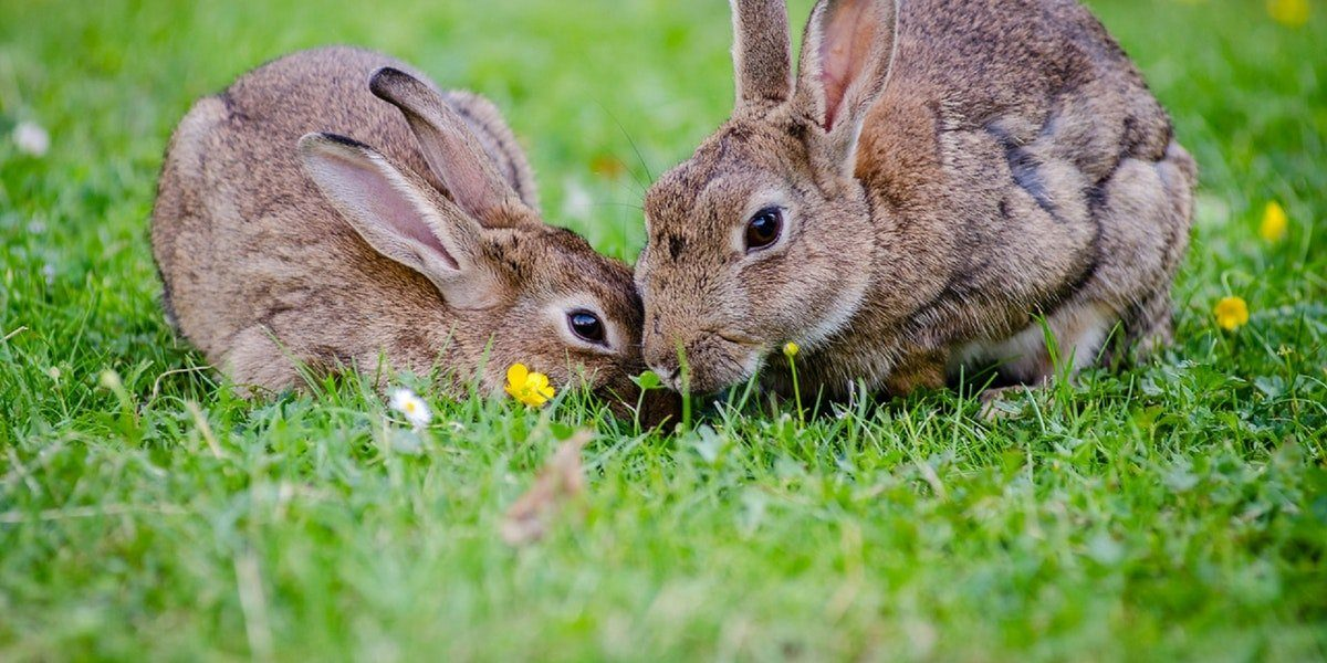 Best Reasons to Buy Cruelty-Free Products